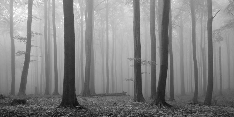 http://www.khoras.net/Khoras/Planet/Forests/Mist%20Forest/MistForest.jpg