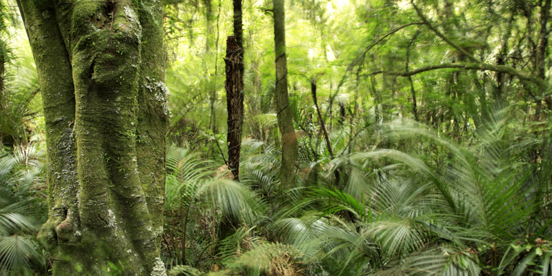 tropical rainforests vs tropical grasslands Comparing ecosystems mini-project deer can be found in grasslands and in temperate forests tropical rain forest temperate forest: tundra taiga.